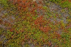 Red and green anophyte and twigs background Royalty Free Stock Photo