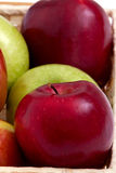 Red and green apples. Colorful red and green apples for healthy eating Stock Images