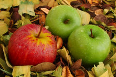 Red and green apples. Composition Royalty Free Stock Images
