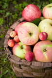 Red and green apples. Close-up of red and green apples stock photo