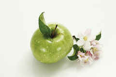 Red and green apples and apple blossom, elevated view Stock Images