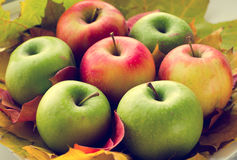 Red and green apples with autumn maple leaves Stock Photo
