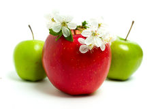 Red, green apples and flowers Royalty Free Stock Photography