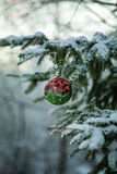 Red and Green Ball on Christmas Tree Stock Photography