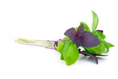 Red and green basil Stock Photography