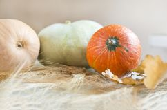 Red, green and beige pumpkins, dry leaves, wheat spikelets, autu Stock Photo