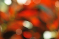 Red green  bokeh nature background Stock Image