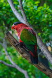 Red green bright parrot in Puerto de la Cruz. Santa Cruz de Tenerife,Tenerife, Canarian Islands Stock Photos