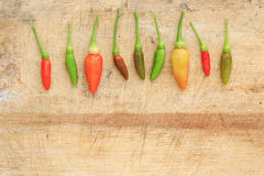 Red green and brown Chili Stock Photography