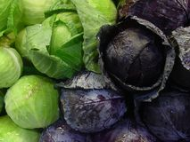 Red and Green Cabbage. Closup royalty free stock photos