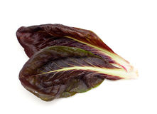 Red and green chicory salads Stock Photo