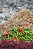 Red and green chili pepper in nepali market Royalty Free Stock Photos