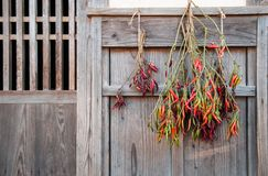 Red green chili peppers hanging outdoor on wooden wall stock photo