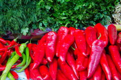 Red and green chili peppers, parsley and dill Royalty Free Stock Photo