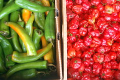Red and Green Chilies royalty free stock images