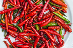 Red and green chilli on white plate Stock Photos