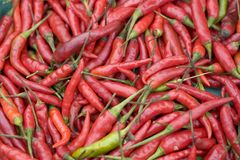 Red & Green Chillies. In close up royalty free stock photos