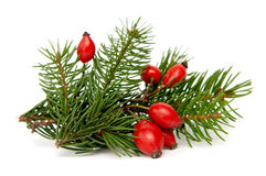 Red-green christmas arragement Royalty Free Stock Photos