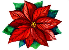 Red and green Christmas flower Stock Photography