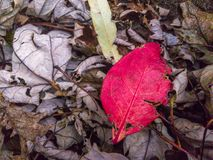 Red and green fall colors and fallen leaves. royalty free stock photo