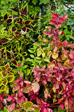 Red and green foliage Royalty Free Stock Images