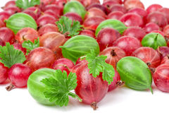 Red and green gooseberries with leaves isolated on white background Stock Photos