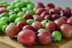 Red and green gooseberries Royalty Free Stock Images