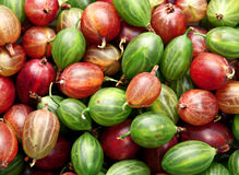 Red and green gooseberry Stock Image
