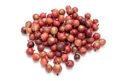 red green gooseberry on white isolated background stock images