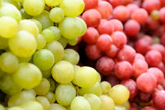 Red and green grape Stock Photography