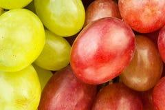 Red green grape Stock Photos