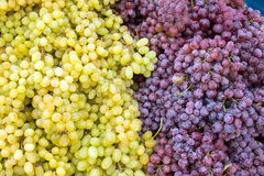 Red and green grapes Stock Images