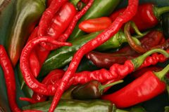 Red and Green Hot Chili Pepper Varieties Royalty Free Stock Photos