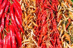 Red and green hot chilly peppers Stock Photo