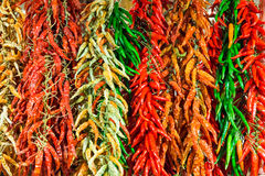 Red and green hot chilly peppers Stock Image