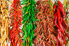 Red and green hot chilly peppers Stock Images
