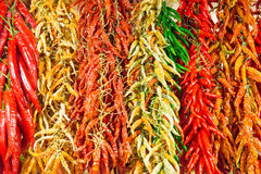 Red and green hot chilly peppers Royalty Free Stock Images