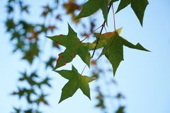 Green leaf and branch in fall Stock Photo