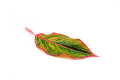 Red and green leaf Royalty Free Stock Photos