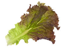 Red and green leaf of lettuce Stock Images