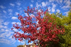 Red and green leaves against blue sky Stock Images