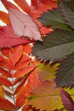 Red and green leaves vertical Royalty Free Stock Photo