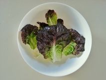 The red and green lettuce in the bowl,  Food ingredients, Fresh vegetables Stock Photo