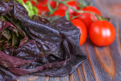 Red and green lettuce Stock Photography