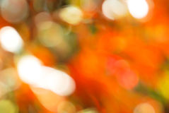 Red green light bokeh nature Stock Images