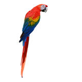 Red and green macaw Royalty Free Stock Images
