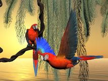 Red and Green Macaws Royalty Free Stock Image