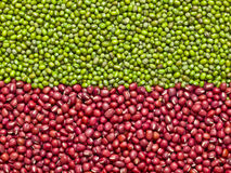 Red and green mung beans Royalty Free Stock Photo