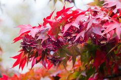 Colored leaves in autumn in Dublin