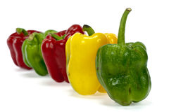 Red green and orange sweet bell peppers Stock Image